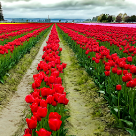 Rows and Rows by Darren Sutherland - Instagram & Mobile Android (  )