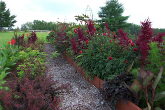Photo: Basic layout  (left to right) - Background of red barberry, cannas;  Path;  5 foot flowerbed;  driveway
