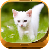 Cute Kitty Wallpapers