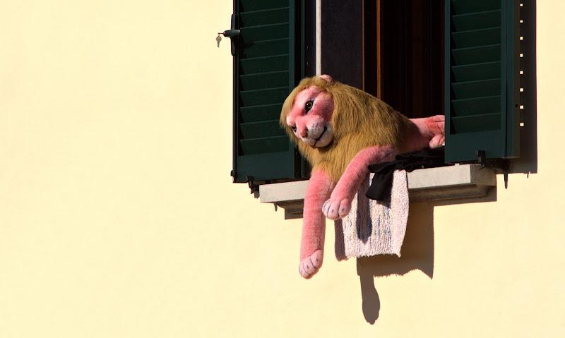il leone alla finestra di ruggeri alessandro