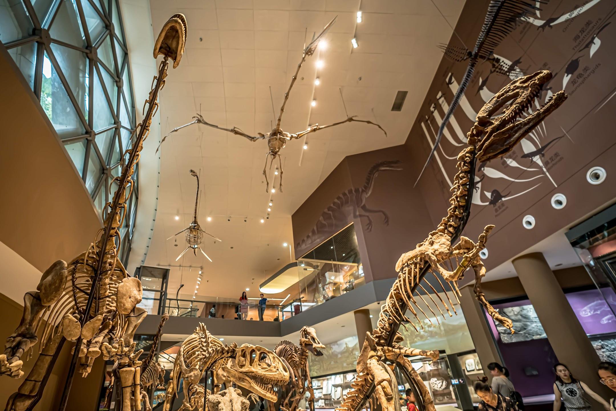 上海自然博物館6