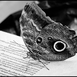 Butterfly by Dave Lipchen - Black & White Animals ( butterfly )