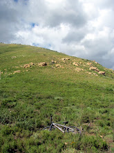 Photo: View up the mountainside