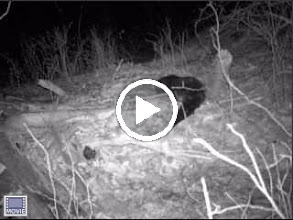 Video: Elizabeth Islands - video, click to play 1/31/2010 - 9:50 PM
