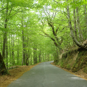 Green Way by Nuno Gomes - Landscapes Forests ( green, gerês, way, gardens, garden )