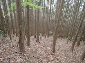 植林との下りに(左手に向かう)