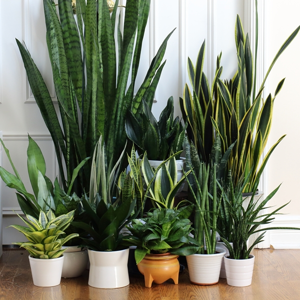 Group plants for maximum impact.