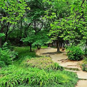 Go Green by Gopichand Kokirkar - Landscapes Forests ( nature, sigma, wide angle, uae, forest, landscape, nikon, korea )