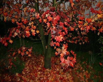 Il fuoco d'autunno. di Rik_Dream_Catcher