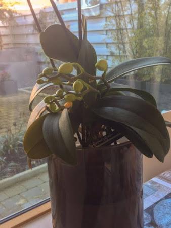 Over orchideeën en organisaties