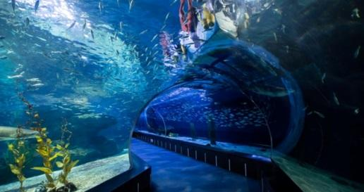 Image result for sea life busan aquarium