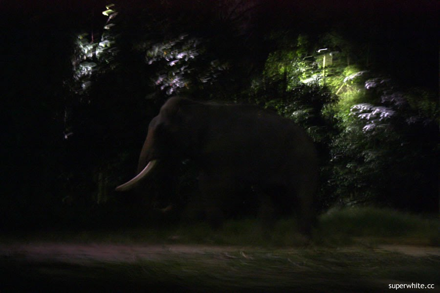 Night Safari Elephant