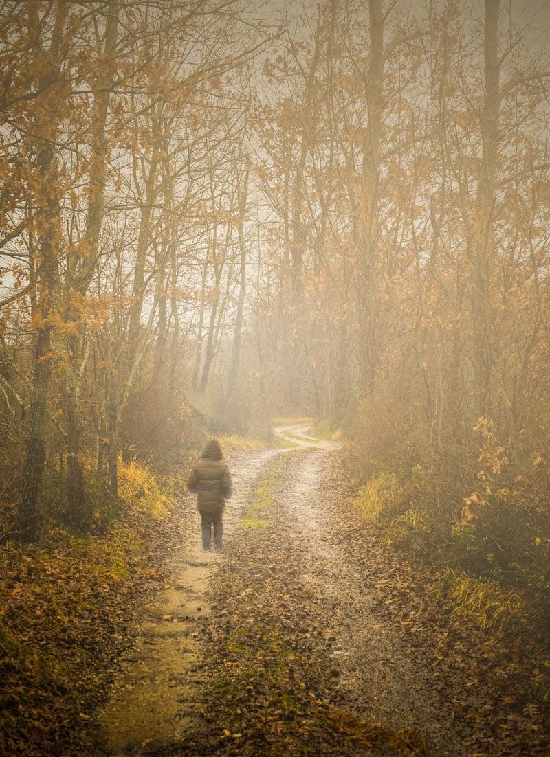 Passeggiando per un sentiero di Diana Cimino Cocco