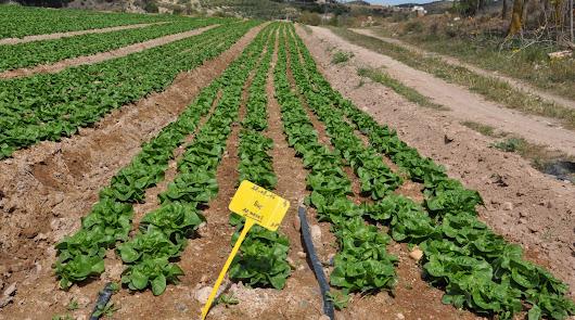 Empresas agrícolas del Levante crean una asociación de cultivos al aire libre