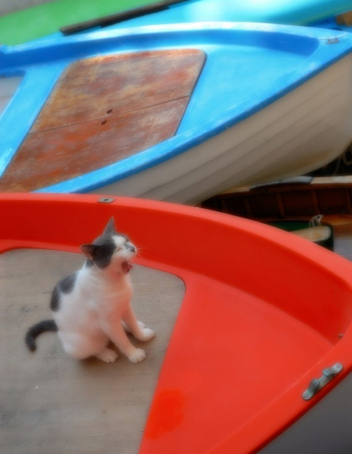 In barca...conciliando di photoivan
