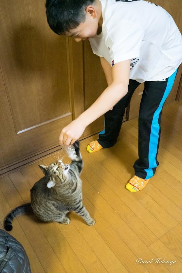 長男・祐輝くん(11歳)と遊ぶショコラちゃん