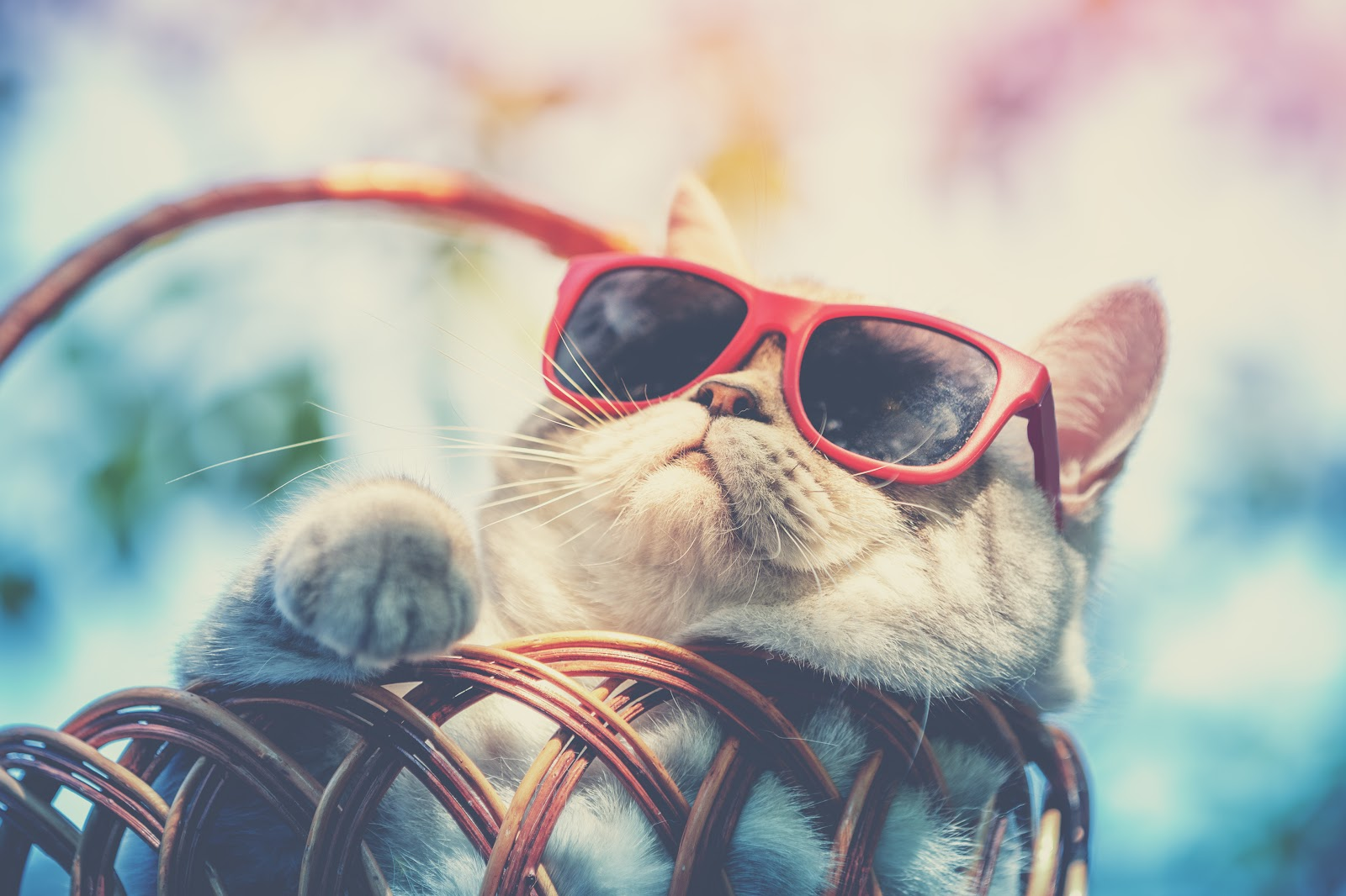 cool cat wearing sun glasses lying in a basket