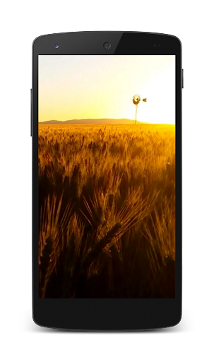 Wheat HD Video Wallpaper