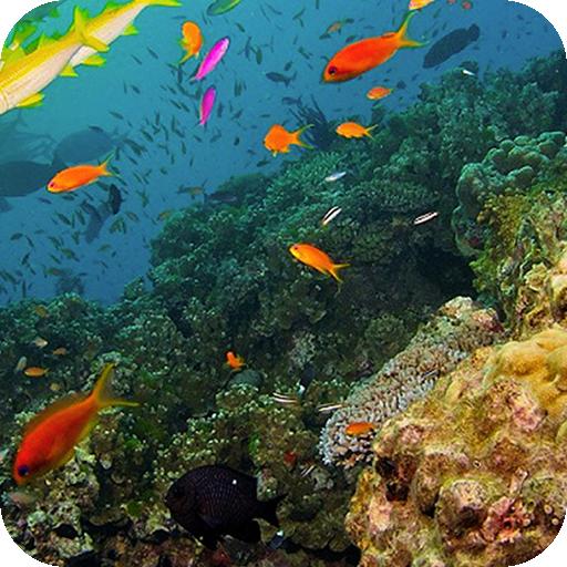 Coralline Barrier Background 個人化 App LOGO-APP試玩
