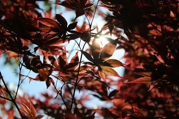 foglie controluce di LaGe