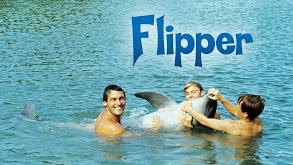 Flipper thumbnail