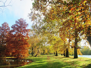 Photo: Beautiful lighting on yellow and orange autumn trees on an island at Eastwood Park in Dayton, Ohio.