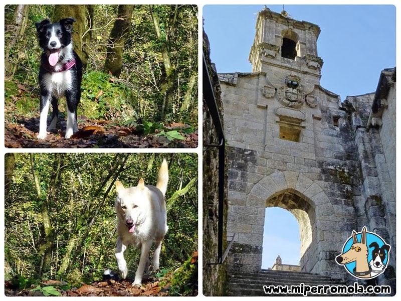 Senderismo con Perro Monasterio de Caaveiro, Can de Palleiro y Border Collie