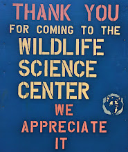 Photo: Saturday, January 28, 2017: GSM outing to Wildlife Scince Center. It was in the mid 20s for our outing, so the animals were fairly active in order to stay warm.