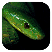 App Icon for eSnakes Southern Africa App in Czech Republic Google Play Store