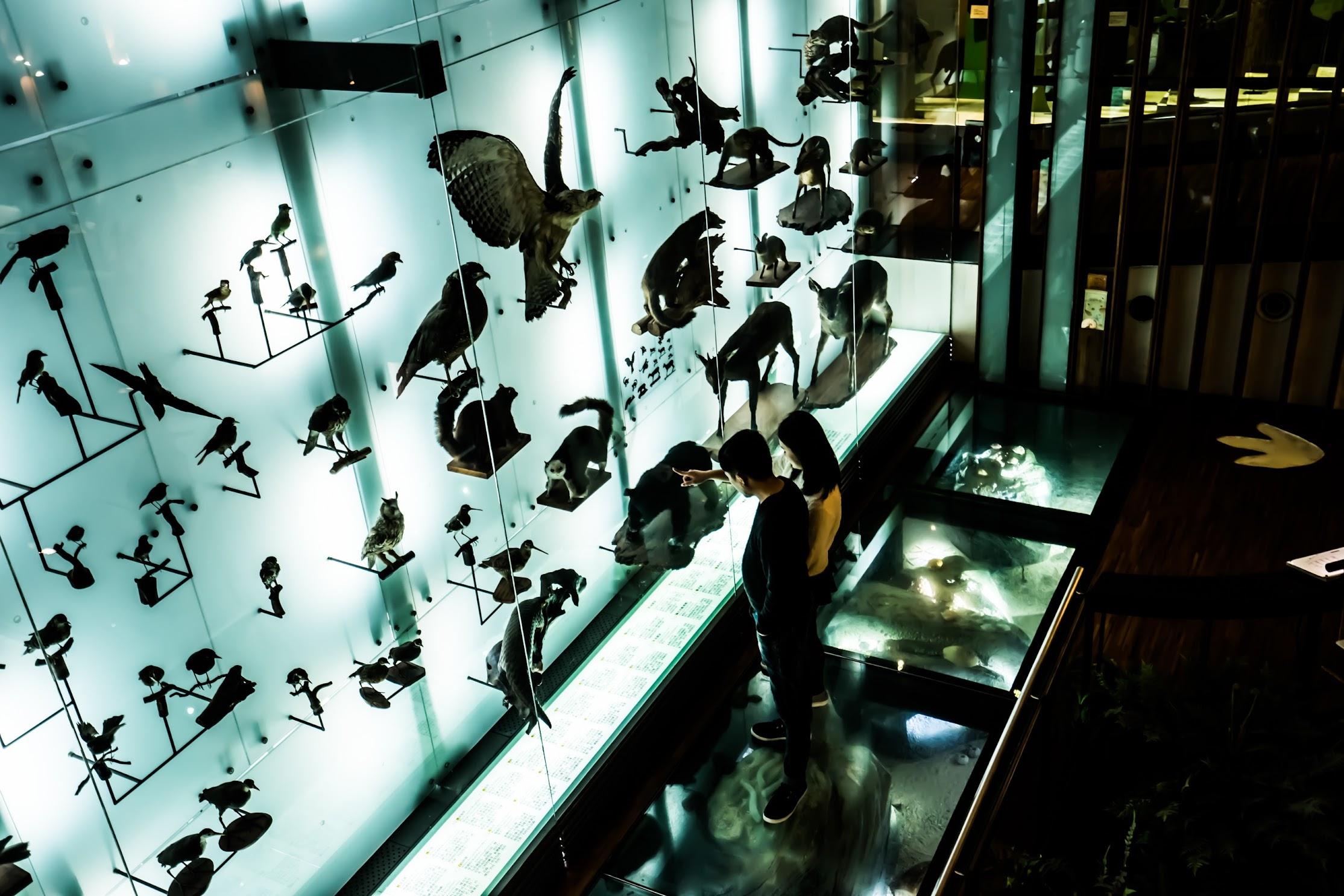 国立台湾博物館5