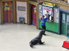 Photo: Sea Lion & Otter Stadium