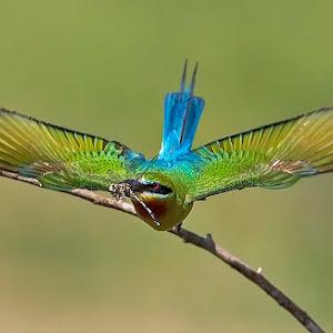 bt-bee-eater-full-spread-px.jpg