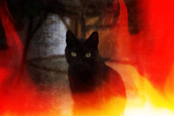 I'm a witch di Massimiliano_Montemagno