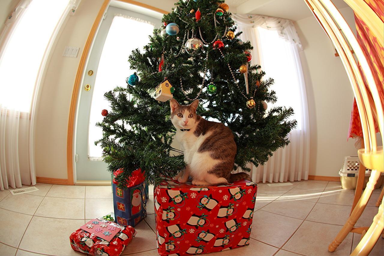 Photo cat Christmas Christmas tree Gifts Holidays