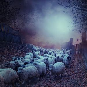 Sheep-of-the.jpg