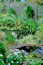 Photo: If there's room, a bridge over the creek allows one to walk through the garden and around the pond - an interACTIVE garden!