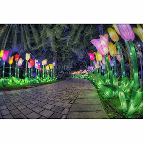 Pastel Flowers by CJ Cantos - City,  Street & Park  Night