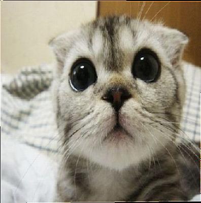 Cute Cat Nova Skin