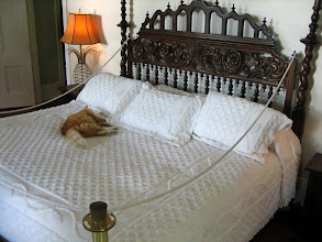 Photo: A cat sleeping on the Hemingway's bed