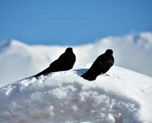 San Valentino sulla neve di laura62