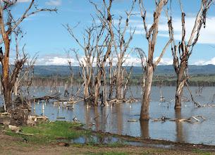 Photo: Nakuru-järven vesi on ollut viime vuosina kovin korkealla