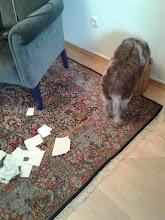 Photo: hm - mal nachsehen ob Frauchen auch den Papiermüll ordentlich getrennt hat