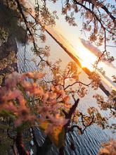 Photo: Beautiful sunlight blushing the pear blossoms pink at Eastwood Park in Dayton, Ohio.