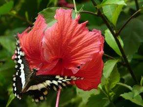 Photo: repas furtif du papillon