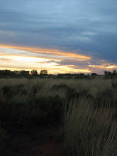 Photo: Year 2 Day 218 - Sunsetting Over the Scrub Around Uluru