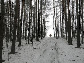 Photo: Выход из леса в поле