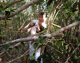 Photo: Lilian Hayball, Ironwood Forest, behind University College of the Cayman Islands, Grand Cayman. Photo: Ann Stafford, May 26, 2009