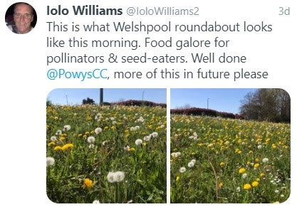 Iolo urges council to 'let it grow'!