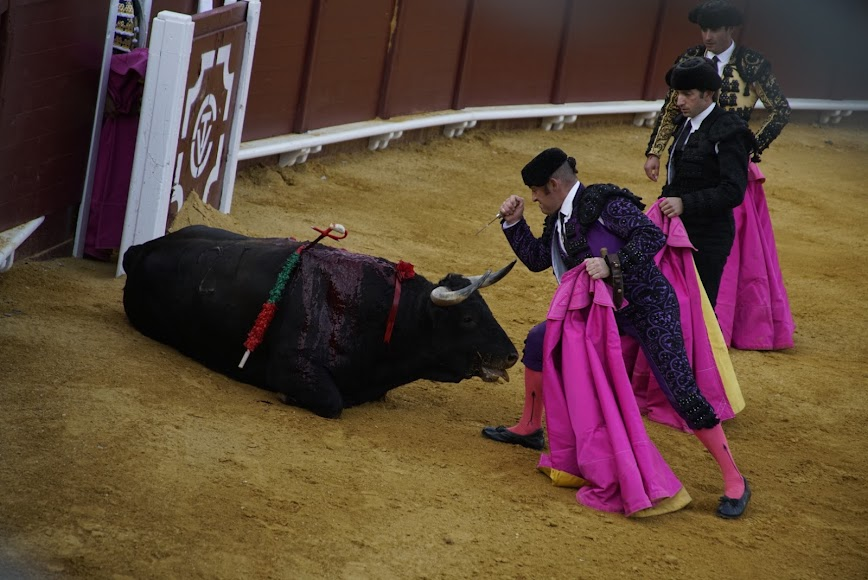 Muerte de uno de los toros de la tarde.