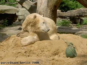 Photo: Der Jutesack wird auf die Tatze gelegt ;-)